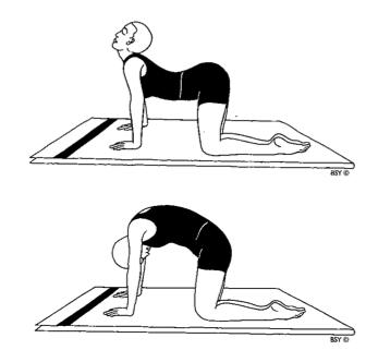 Resultado de imagen para ejercicio gato mahometano